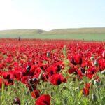 دانلود آلبوم سیما بینا افغانستان