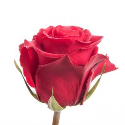دانلود آهنگ گل آذین همراه شو عزیز (تنها نمان به در همراه شو عزیز)