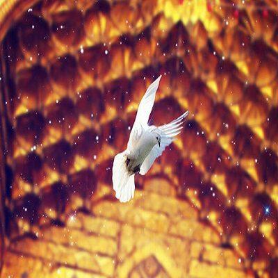 آهنگ امام رضا قربون کبوترات